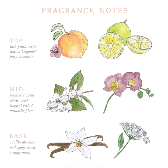 Perfume - Fragrance Description